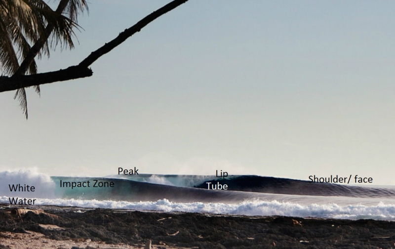 Anatomy of a Surf Wave